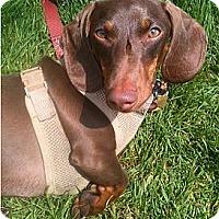 Adopt A Pet :: Michael - San Jose, CA