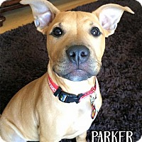 Adopt A Pet :: Parker - Cary, IL