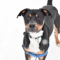 Adopt A Pet :: Cooper - Meridian, ID