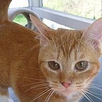 Adopt A Pet :: Buddha - Durham, NC