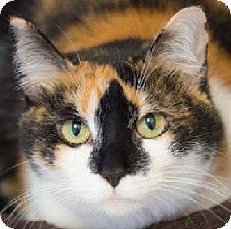 Domestic Shorthair Cat for adoption in Decatur, Georgia - Firefox