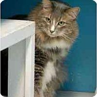 Adopt A Pet :: Trey - Marietta, GA