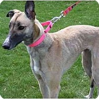 Adopt A Pet :: Candi - Fremont, OH