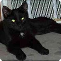Adopt A Pet :: Spider - Milwaukee, WI