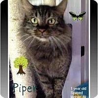Adopt A Pet :: Piper - Mobile, AL