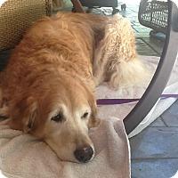 Adopt A Pet :: Lady - Foster, RI