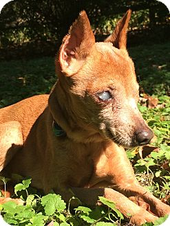 Miniature Pinscher Mix Dog for adoption in Wilmington, Delaware - Faith
