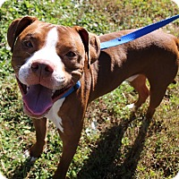 Adopt A Pet :: Bruno Mars - Ft. Myers, FL