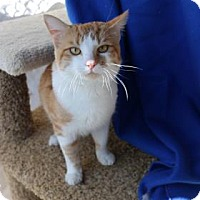 Adopt A Pet :: Berry - Yucaipa, CA