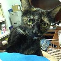 Adopt A Pet :: Tater Tot - Louisville, KY