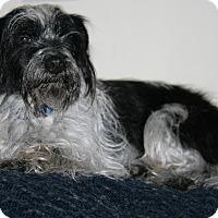 Adopt A Pet :: Dan - Sherman, CT