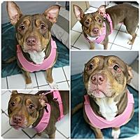Adopt A Pet :: Princessa - Forked River, NJ