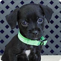 Adopt A Pet :: Davy - Fort Davis, TX