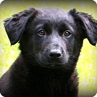 Adopt A Pet :: Lennox~adopted! - Glastonbury, CT