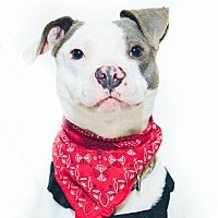 Adopt A Pet :: Manny - New Castle, PA