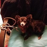 Adopt A Pet :: Princess - Union Grove, WI