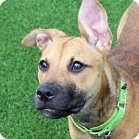 Adopt A Pet :: Sage - Loxahatchee, FL