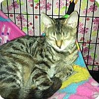 Adopt A Pet :: Rosie Posie - Colmar, PA