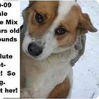 Adopt A Pet :: # 839-09 @ Animal Shelter - Zanesville, OH