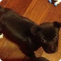 Adopt A Pet :: Shirley - Modesto, CA