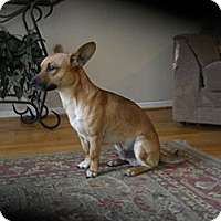 Adopt A Pet :: Marco - Charlotte, NC