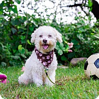 Adopt A Pet :: Bonnie - Calgary, AB