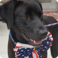 Adopt A Pet :: Bobby - Lewisville, IN