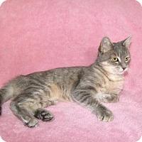 Adopt A Pet :: Cordelia - Hamilton, ON