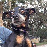Adopt A Pet :: Jasmine - Gainesville, FL