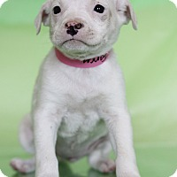 Adopt A Pet :: Fancy - Waldorf, MD