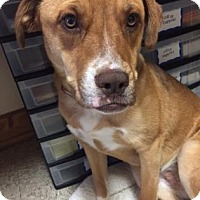 Adopt A Pet :: Sandy - Cashiers, NC