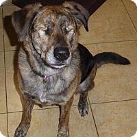Adopt A Pet :: Briggly - San Diego, CA