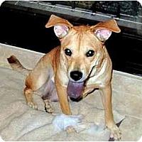 Adopt A Pet :: Lexi - Marietta, GA