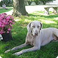 Adopt A Pet :: Wyatt - Attica, NY