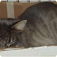 Adopt A Pet :: Cocoa - Westfield, MA