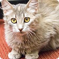 Adopt A Pet :: Elsa - Chicago, IL
