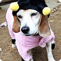 Adopt A Pet :: Sally - Creston, CA