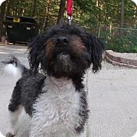 Adopt A Pet :: Bob