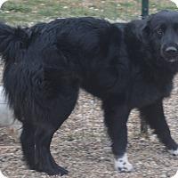 Adopt A Pet :: Shadow - Prole, IA