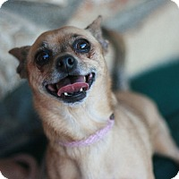 Adopt A Pet :: CC - Canoga Park, CA