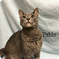 Adopt A Pet :: Pablo - Foothill Ranch, CA