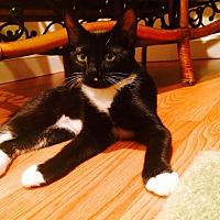 Adopt A Pet :: Sunny - Marlton, NJ
