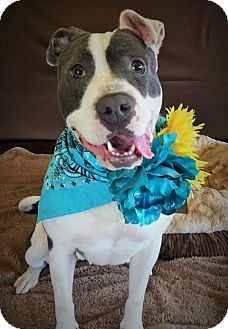 Terrier (Unknown Type, Medium) Mix Dog for adoption in Flint, Michigan - Tori - Adopted
