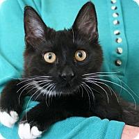 Adopt A Pet :: Ace - Republic, WA