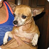 Adopt A Pet :: Diesel - Tavares, FL