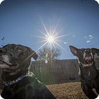 Adopt A Pet :: Laura and Luda - Austin, TX