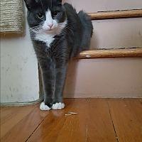 Adopt A Pet :: Skadi - Pottstown, PA