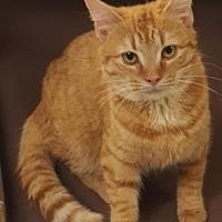 Adopt A Pet :: Luigi - Americus, GA