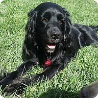 Adopt A Pet :: Noel - Santa Barbara, CA