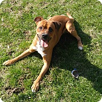 Adopt A Pet :: 1-7 Tiberius - Triadelphia, WV